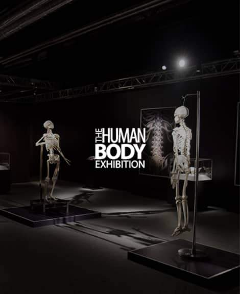 THE HUMAN BODY EXHIBITION- UNDERSTANDING THE BEAUTY OF HUMAN BODY